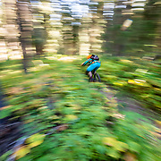Andrew Whiteford rides through the forest of the Black's Canyon Singletrack off of Teton Pass.
