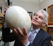 Duncan Phillips, organiser of the Chelsea Antique Fair holds up a giant egg, the largest in the world, laid in the early 17th century by the Great Elephant Bird of Madagascar. The egg will be one of the most extraordinary exhibits ever to appear for sale at The Chelsea Antiques Fair at Chelsea Old Town Hall, King's Road, from 25 to 29 March. Belonging to antique dealer and exhibitor John Shepherd from Kent, the egg is larger than any known egg, with a circumference exceeding a metre, greater in size than a rugby ball, and is more than 350 years old. The egg will be on sale for GBP 5,000.