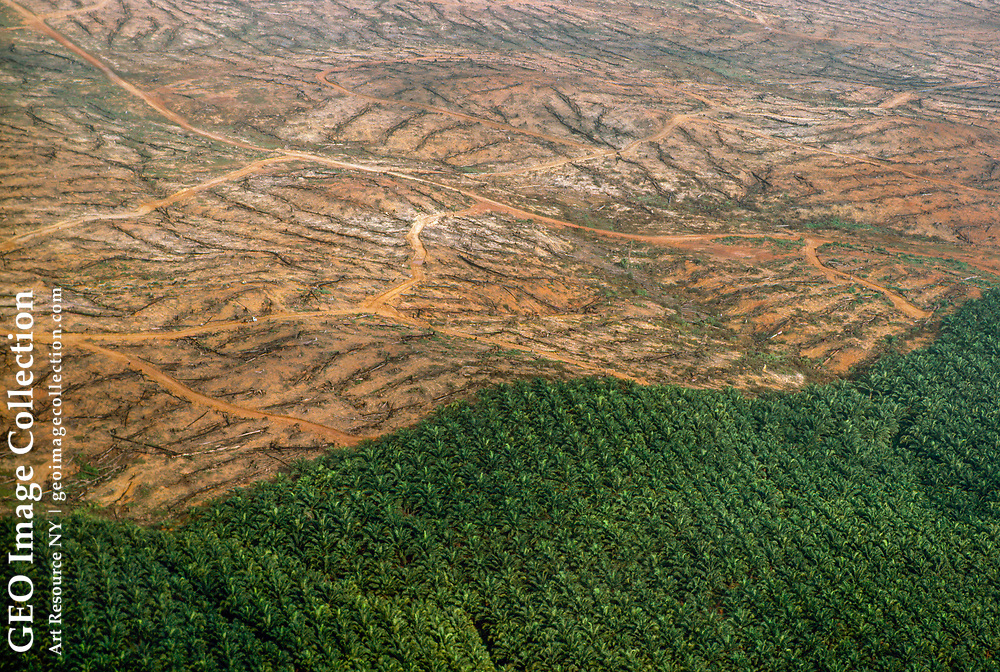 Clear cut areas to be used for oil palm plantations.