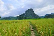Laos, Vang Vieng, Path through rice fields leading to mountains. Vang Vieng, Laos,
