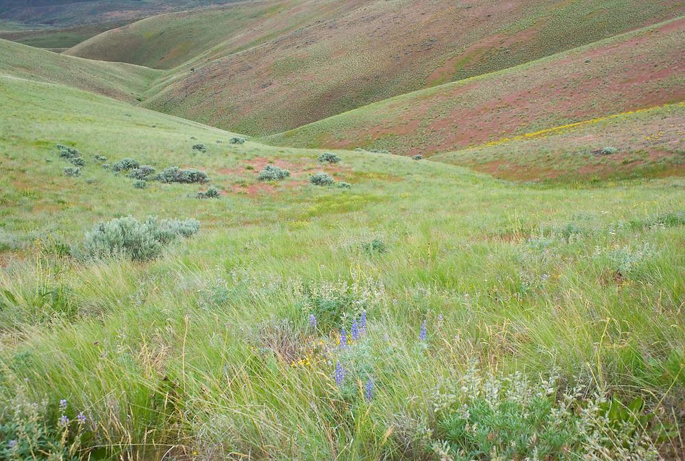 Hillside and drainage gully on Umptanum Ridge eastern Washington USA&#xA;<br />