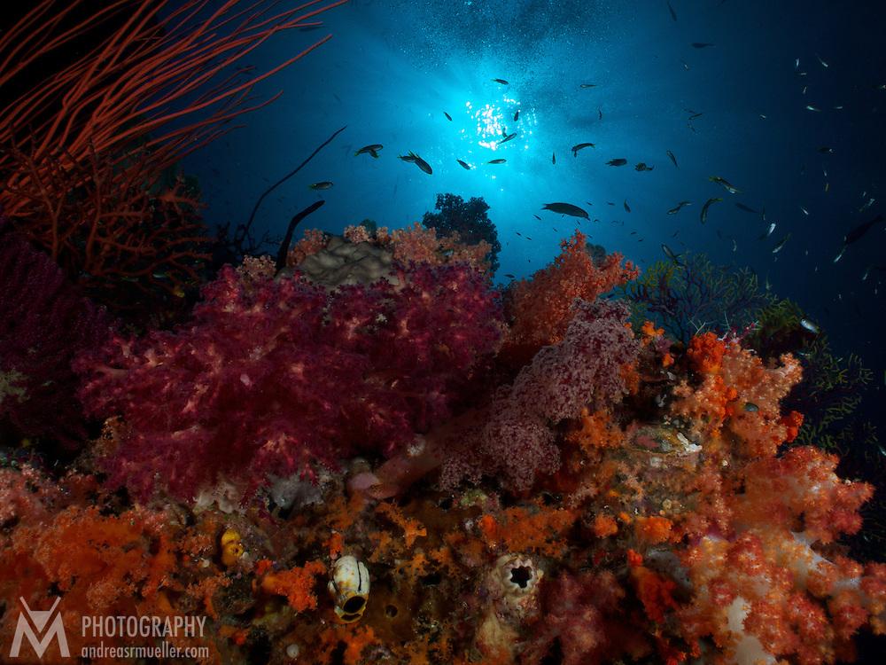 Dive Spot: Boo