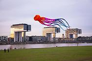 large octopus kite on the banks of the river Rhine in the town district Deutz, view to the Rheinau harbour with the Crane Houses, Cologne, Germany.<br /> <br /> grosser Octopus Drachen ueber den Rheinwiesen in Deutz, Blick zum Rheinauhafen mit den Kranhaeusern, Koeln, Deutschland.