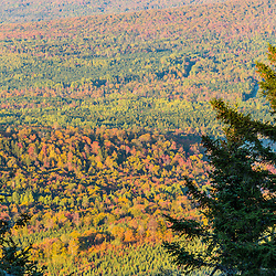 Working forest in Reddington Township, Maine.