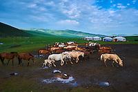 Mongolie, Province de Ovorkhangai, Vallee de l'Orkhon, campement nomade // Mongolia, Ovorkhangai province, Orkhon valley, Nomad camp
