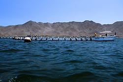 Tuna Farming