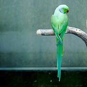 green parrot in a bird zoo at Madeira