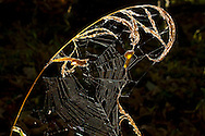 Salisbury Mills, New York  - The afternoon sun shines on a spider web by the Moodna Creek on Oct. 5, 2013.