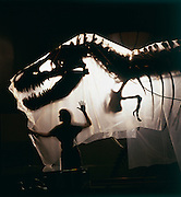 "T. Rex, ""tyrant lizard king,"" was one of the largest-ever meat eating land animals.  The bi-pedal giant grew to some 40 feet (12 meters) and weighed up to 7 US tons (6.5 metric tons)<br /> T. Rex was one of the largest-ever meat eating land animals.  The bi-pedal giant grew to some 40 ft (12 meters) weighed up to 7 US tons (6.5 metric tons) and sported teeth that were nearly a foot-long (centimeters) with the root."