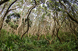 Poor Knights Marine Reserve Aorangi Island, Forest