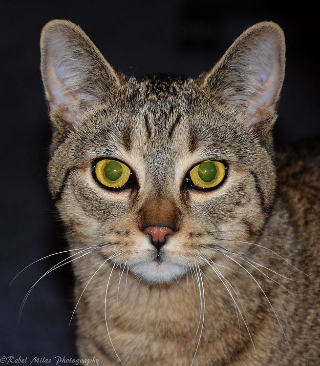 Yogix The Cat Posing For The Camera With His Green Eyes Blazing
