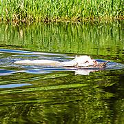 2019 WATKC Hunt Test | Water Work