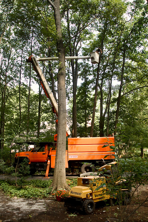 Tree removal service workers.