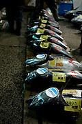 Tuna auction at the Tokyo Metropolitan Central Wholesale Market or Tsukiji Fish Market is the largest fish market in the world.