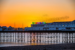 © Licensed to London News Pictures. 02/02/2019. Brighton, UK. Starlings murmuring at sunset in Brighton and Hove. Photo credit: Hugo Michiels/LNP