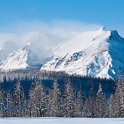 glacier national park winter scortched trees red eagle file near divide mountain