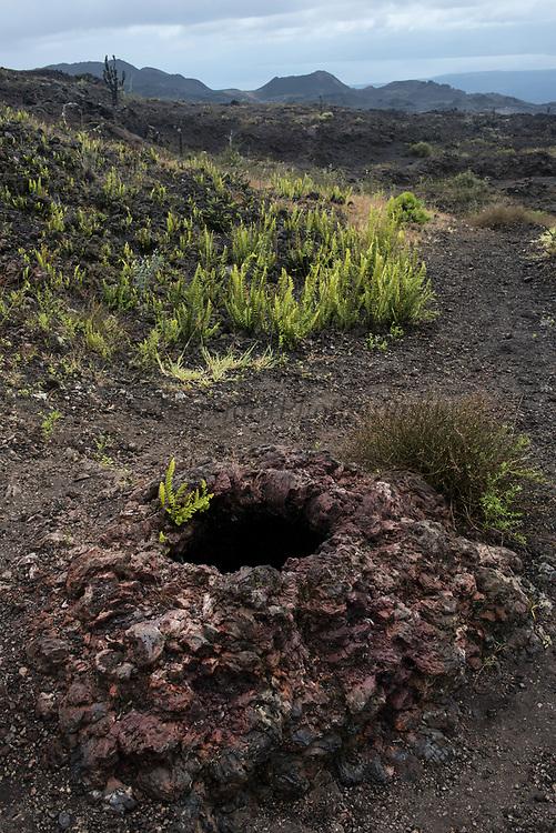 Lava oven (hornito)<br /> Volcan Chico<br /> Sierra Negra Volcano<br /> Isabela Island, <br /> GALAPAGOS,  Ecuador, South America