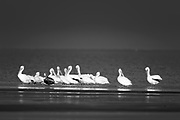 Wildlife photography from South Padre Island, Texas, USA