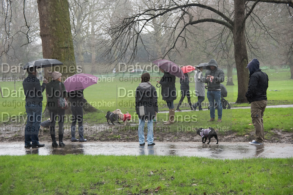London Pugs Monthly Meetup, Greenpark. 2 January 2016