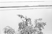 Snow sticks to power lines above a tree in Boulder, Colorado.