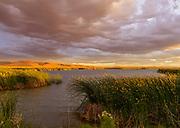 Marsh at Sunset, Stillwater National Wildlife Refuge, Nevada