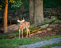 Young buck with antlers. Image taken with a Fuji X-H1 camera and 80 mm f/2.8 OIS macro lens