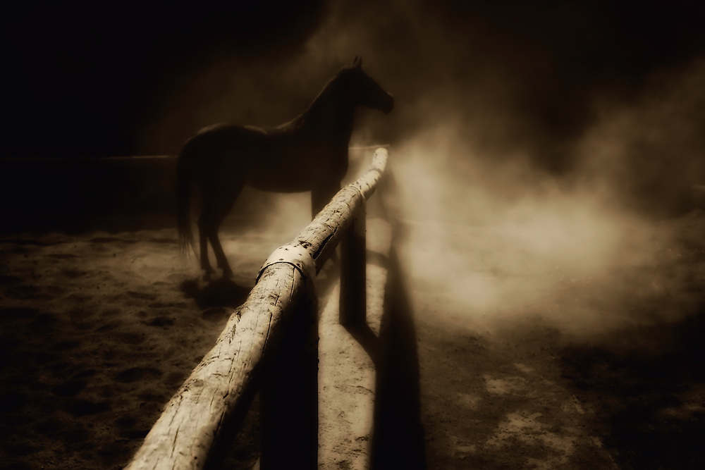 Horse in a paddock.