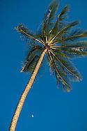 Palm Trees at Haleiwa Beach Park, Waialua Bay, North Shore, Oahu, Hawaii