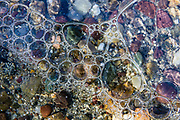 Bubbles cluster under ice in String Lake, Grand Teton National Park, Wyoming, USA.