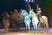 Nederland, Nijmegen, 29-12-2014In het kerstcircus in Nijmegen treden voor waarschijnlijk de laatste keer wilde zoogdieren op. Het kabinet heeft besloten dat dit in 2015 verboden wordt. Het verbod geldt alleen voor wilde zoogdieren zoals olifanten , leeuwen en tijgers, zebras, apen enz. Tijdens de voorstelling van circus Freiwald neemt olifant Buba, 39 jaar waarvan 22 bij het circus, alvast afscheid van het publiek. In de show zitten acts met katten, paarden, kamelen en boerderijdieren. Foto: Flip Franssen/ Hollandse Hoogte