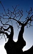 tree,fine art photography,