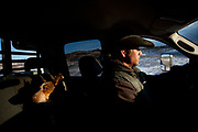 A cowboy drives a pickup truck hauling horses to a hunting camp in the Colorado Rocky Mountains.