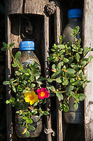 PET Planters - creative use of used PET drink bottles, using them as planters for seedlings at Bangkok Tree House