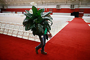 Andy Kirsop carries a decorative tropical plant for IU's graduate school commencement, which will take place Friday inside Mellencamp Pavilion. The undergraduate ceremony is Saturday. (Photo by Jeremy Hogan)