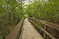 NC01370-00...NORTH CAROLINA - Boardwalk trail through the salt marsh to Currituck Sound in the town of Corrola on the Outer Banks.