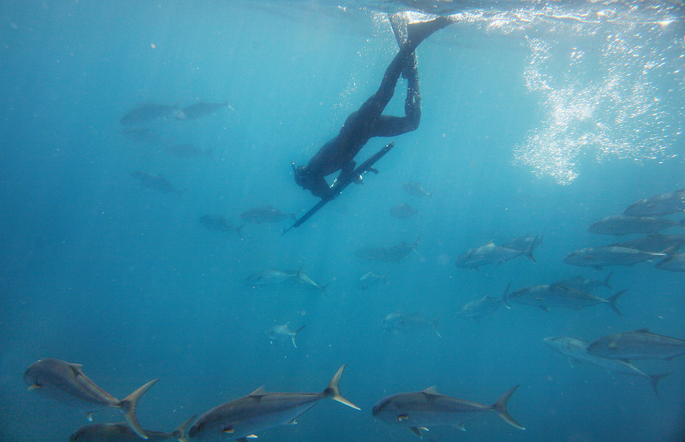 Kolt Johnson swims through a school of Amberjack while beginning a dive. Freediving is a type of breath-hold diving in which divers descend for the length of a breath with out any SCUBA tanks or breathing apparatus. Spearfishing is a type of hunting done with underwater guns connected to harpoons by strong line.