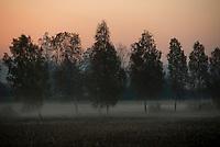 Gmina Korycin, woj podlaskie, 17.10.2018. N/z przydrozne drzewa tuz przed wschodem slonca fot Michal Kosc / AGENCJA WSCHOD