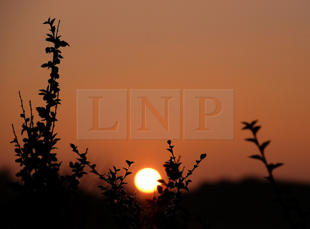 © Licensed to London News Pictures.02/11/15<br /> Redcar, UK. <br /> <br /> The sun sets behind bushes at Coatham Marshes in Redcar this evening.<br /> <br /> Photo credit : Ian Forsyth/LNP