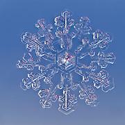 Snowflake magnified under microscope | Snowflakes | Snow Crystal | Photographs | Schneeflocke | Schneekristall | Fotografie