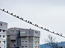 Birds perching on electric cable and tree in front of buildings, Getxo, Basque Country, Spain, Europe