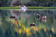 Deadheads at Silver Lake in Silver Lake Provincial Park near Hope, British Columbia, Canada