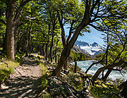 """See the glacier-clad Marconi Range from the Rio Electrico Valley along the trail to Refugio Piedra del Fraile, northwest of El Chalten, Santa Cruz Province, Argentina, Patagonia, South America. We hiked to Refugio Piedra del Fraile (""""Stone of the Friar"""", 14.5 km round trip). From the refuge, an easy day hike visits scenic Lago Pollone (8.5 km round trip with 320 m gain) beneath towering Cerro Fitz Roy and Aguja Pollone. A more challending path from the refuge ascends very steeply to Paso Quadrado (gaining 1340 m vertically in 8.4 km round trip). This image was stitched from multiple overlapping photos."""