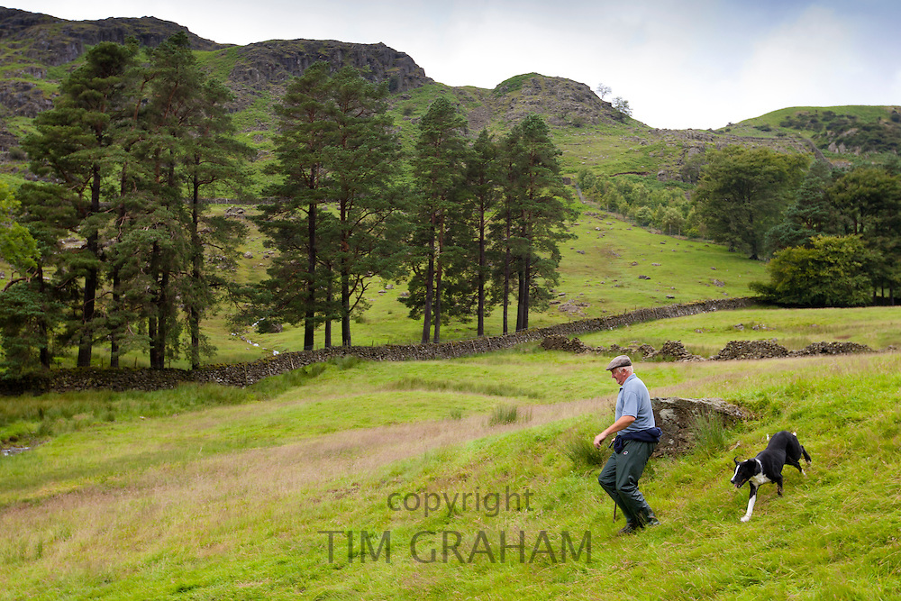 Farmer with sheepdog at Westhead Farm by Thirlmere in the Lake District National Park, Cumbria, UK