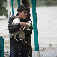 A man salvages rabbits from his home as the Río Blanco in San Pedro Sula rose and swelled with fast-running water as hurricane Iota pushed into Honduras. Precarious housing on the riverside began to be washed away and people rushed to save their belongings.