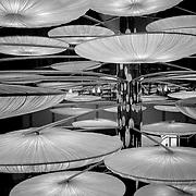 Suspended light discs, Valencia, Spain (December 2006)