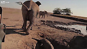 It's for your own good! Baby elephant trapped in a well is rescued by conservationists in amazing video<br /> <br /> Perhaps it's because many of us watched the Disney classic Dumbo as a child that we all seem to have a special place in our hearts for elephants, especially baby ones. <br /> That's what makes this latest video from elephant research and conservation project Amboseli Trust for Elephants - which has now started to trend on the internet - so special.<br /> An eight-month-old calf became stuck in a shallow well in the parched grounds of Amboseli national park in Kenya - while its increasingly anxious mother, Zombe, looked on, powerless to help.<br /> <br /> Luckily, the Trust got word of the incident in the Rift Valley Province earlier this week and sent two jeeps to assist.<br /> The rescue operation began early in the morning - before the mother would have been forced to leave by herders who would soon arrive to water their cattle.<br /> <br /> At first, the team struggled to attach a rope around the calf in the 5ft-deep hole as the low-lying water caused the cord to float to the surface.<br /> Finally, they managed to secure it and, with the other end of the rope attached to a jeep, hauled the animal to safety.<br /> <br /> What followed was truly tearjerking.<br /> The calf thundered across the barren plain, leaving a trail of dust in its wake.<br /> In the distance, the cries of Zombe could be heard as she came running in the opposite direction.<br /> And then they were reunited, embracing each other with their trunks.<br /> They then turned to the camera, perhaps as a sign of gratitude to the little one's saviours.<br /> ©Exclusivepix