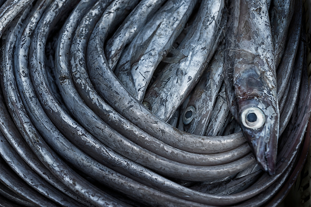 Saber fish on a fish market in Essaouira, Morocco. Food background image.