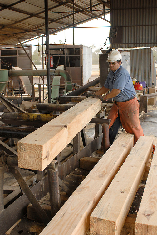 """Orange, TX November 10, 2006: A pine 6""""X6"""" piece of lumber cut at Rogers Lumber Company. Rogers Lumber Co processes pine lumber into rough-cut boards for the construction and trucking industries.  ©Bob Daemmrich/"""