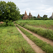 A dirt track leading through a field towards some small pagodas and stupas in Bagan, Myanmar.