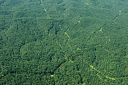 Deforestation due to plant palm oil plantations are pictured from the helicopter, on August 5, 2019 near Sandakan city, State of Sabah, North of Borneo Island, Malaysia. Palm oil plantations are cutting down primary and secondary forests vital as habitat for wildlife including the critically endangered Bornean and Sumatran orangutans. Photo by Emy/ABACAPRESS.COM